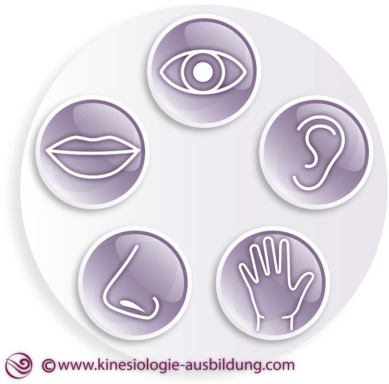 Pädagogische Kinesiologie 2